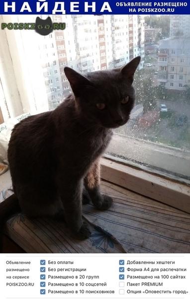 Найден кот  г.Ярославль