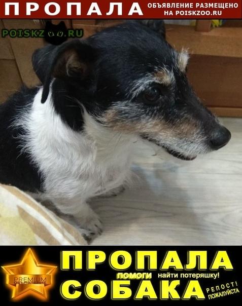 Пропала собака г.Ломоносов