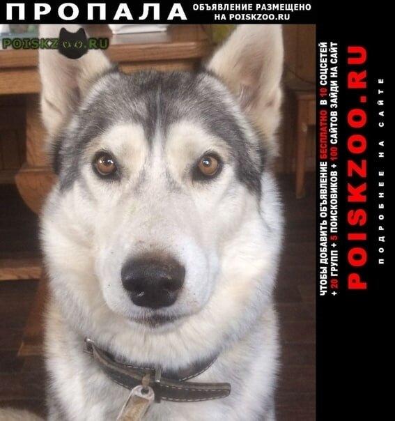 Пропала собака кобель в районе квасниковки г.Энгельс