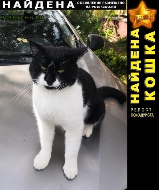 Найден кот черно-белый г.Истра