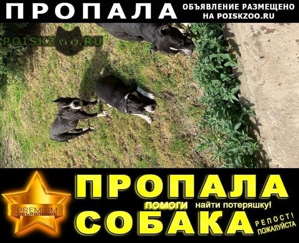 Пропала собака и две собаки Ильский