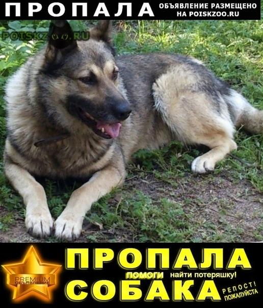 Пропала собака кобель г.Всеволожск