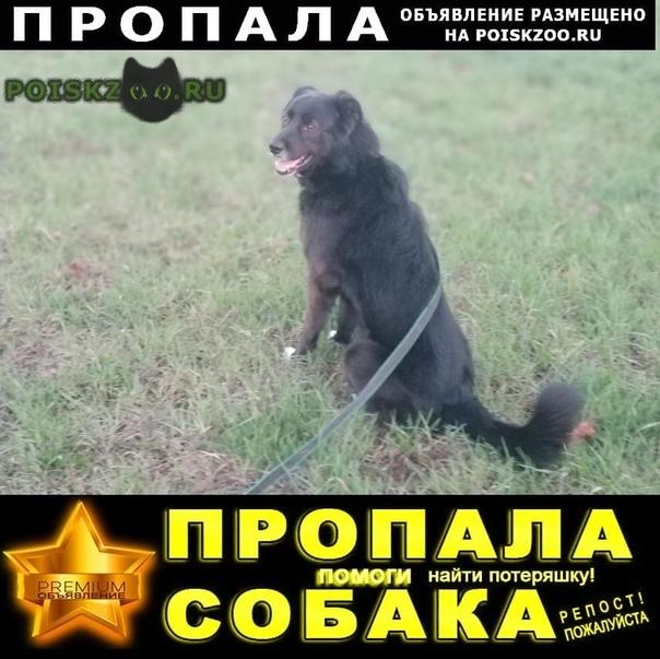 Пропала собака кобель г.Мытищи