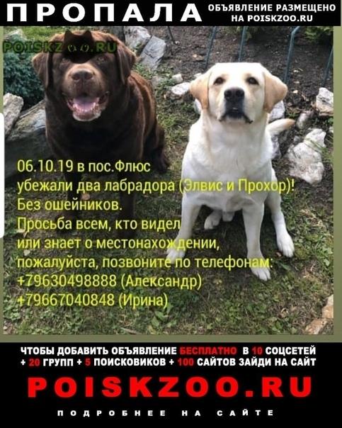 Пропала собака кобель шоколадный г.Екатеринбург