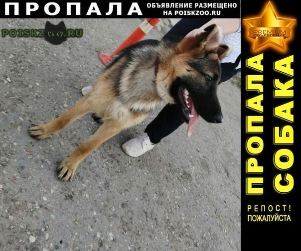 Пропала собака кобель самец немецкой овчарки г.Тверь