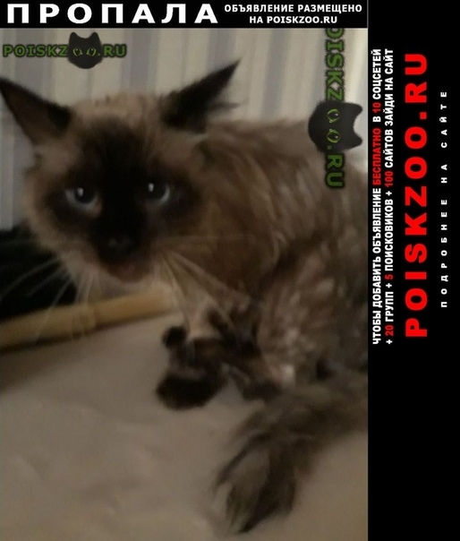 Пропал кот молодой г.Одинцово
