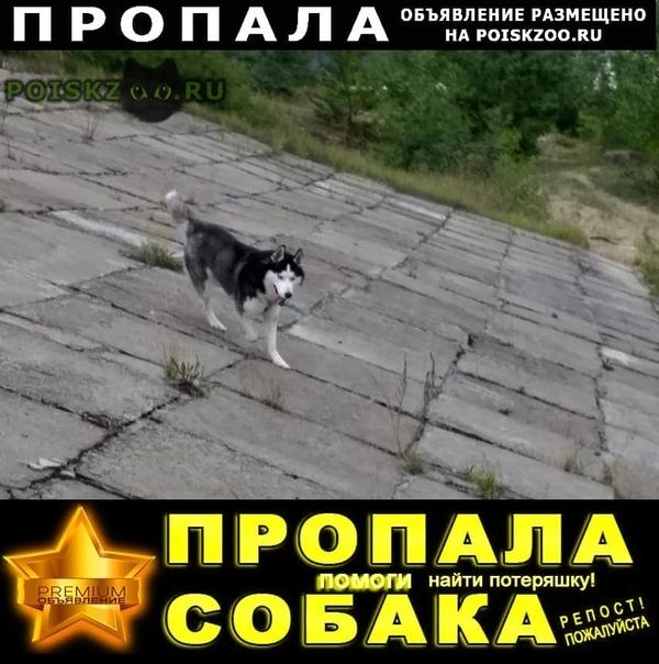 Пропала собака кобель ищу за вознаграждение г.Казань