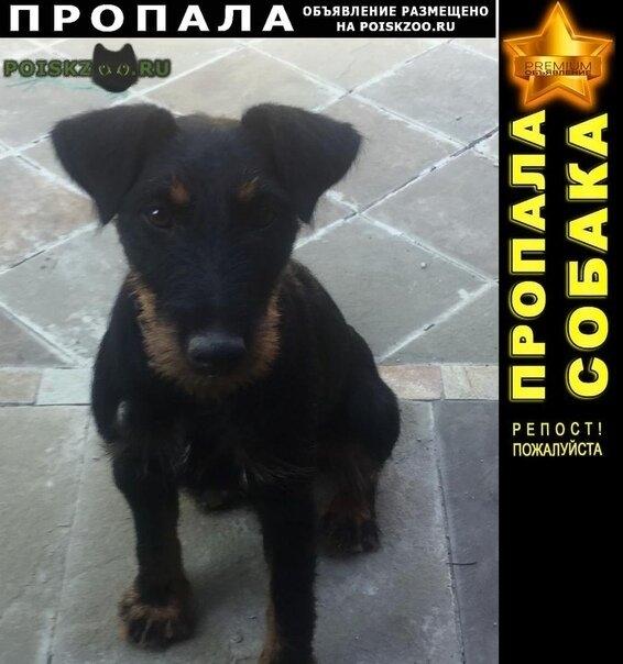 Пропала собака щенок ягдтерьера г.Сочи