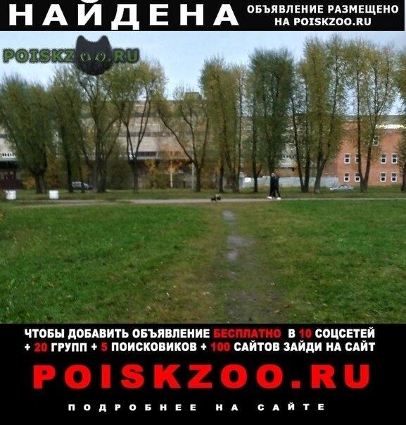 Найдена собака купчино, спб г.Санкт-Петербург