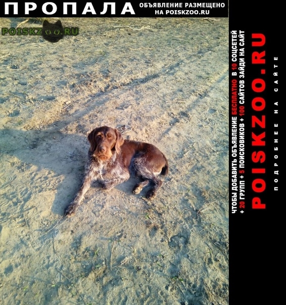 Пропала собака кобель г.Раменское