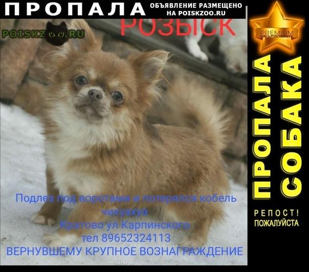 Пропала собака кобель раменский район поселок кратово г.Раменское