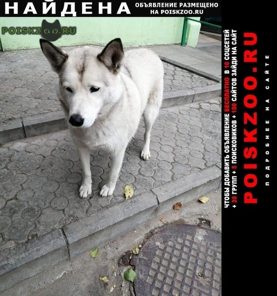 Найдена собака кобель Волгоград