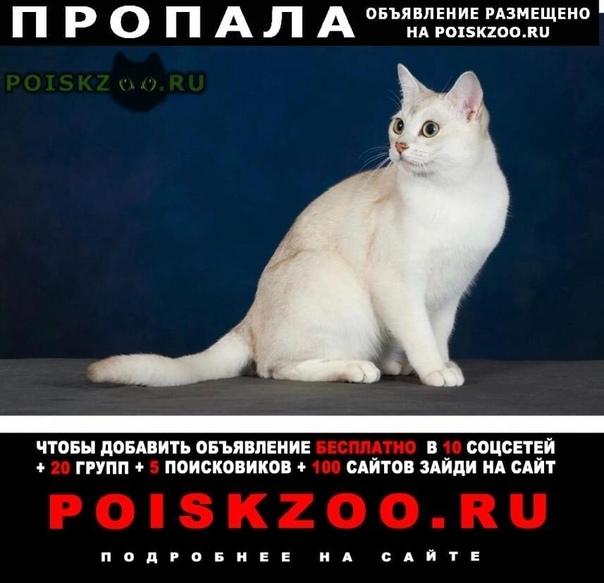 Пропал кот г.Кострома