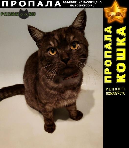 Пропал кот г.Волоколамск