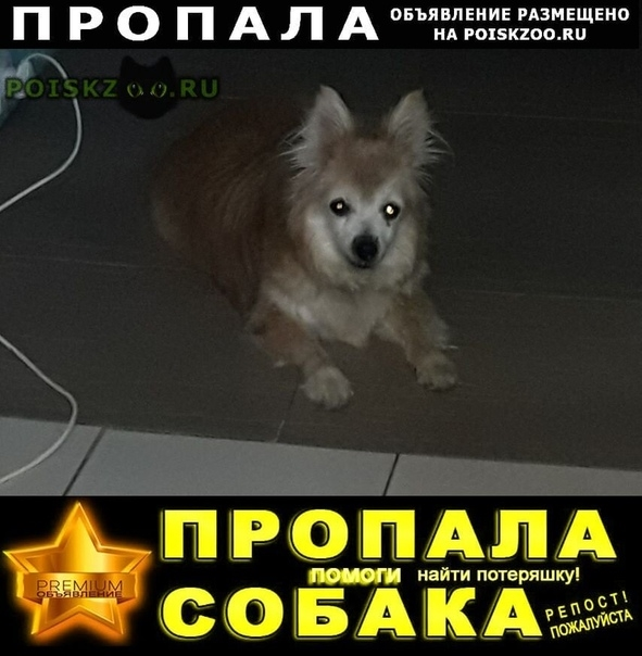 Пропала собака собаке лет г.Волгоград