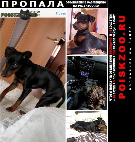 Пропала собака кобель помогите найти друга г.Белгород