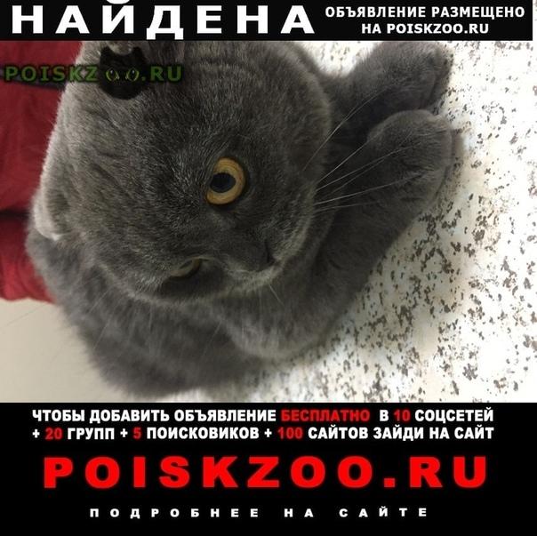 Найдена кошка г.Самара