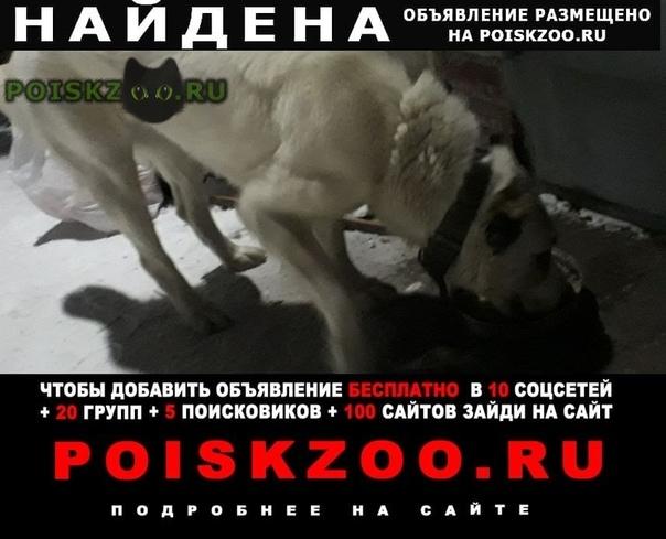 Найдена собака алабай г.Хабаровск