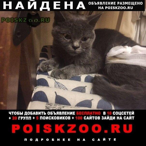 Найдена кошка похожа на британскую г.Ростов-на-Дону