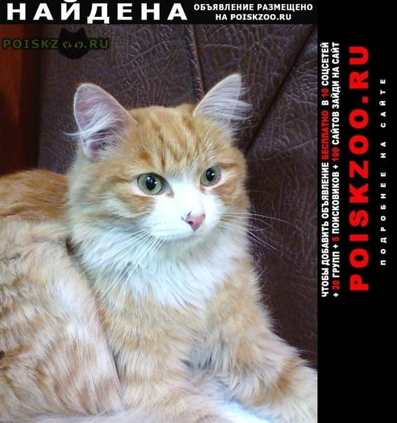 Найден кот Иркутск