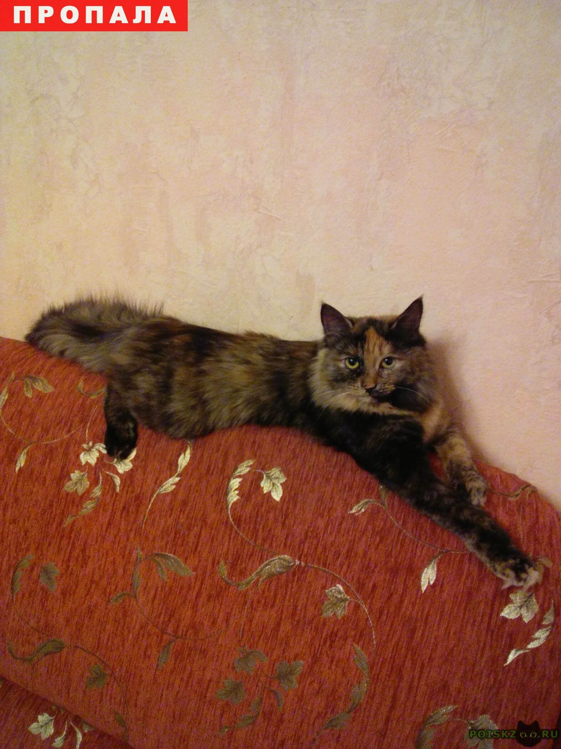 Пропала кошка люся г.Балашиха