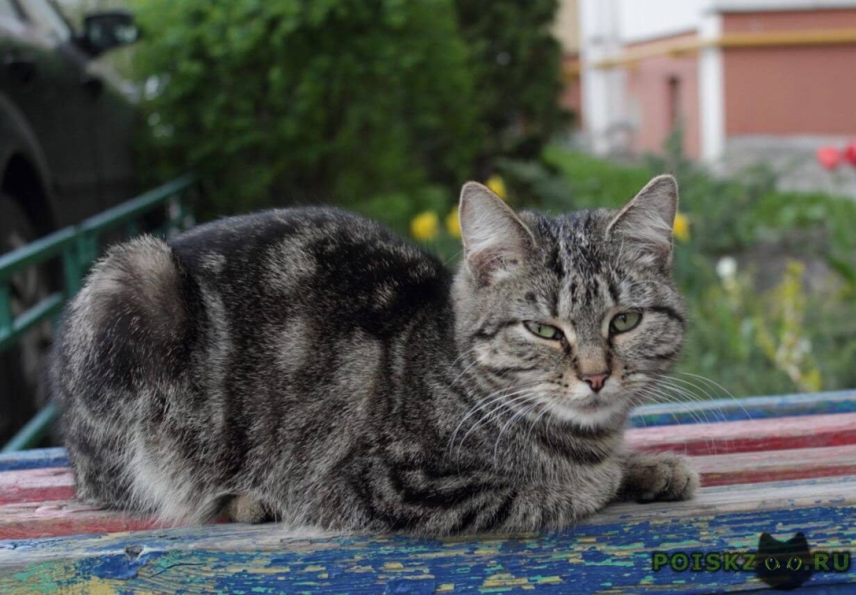 Найдена кошка г.Воронеж