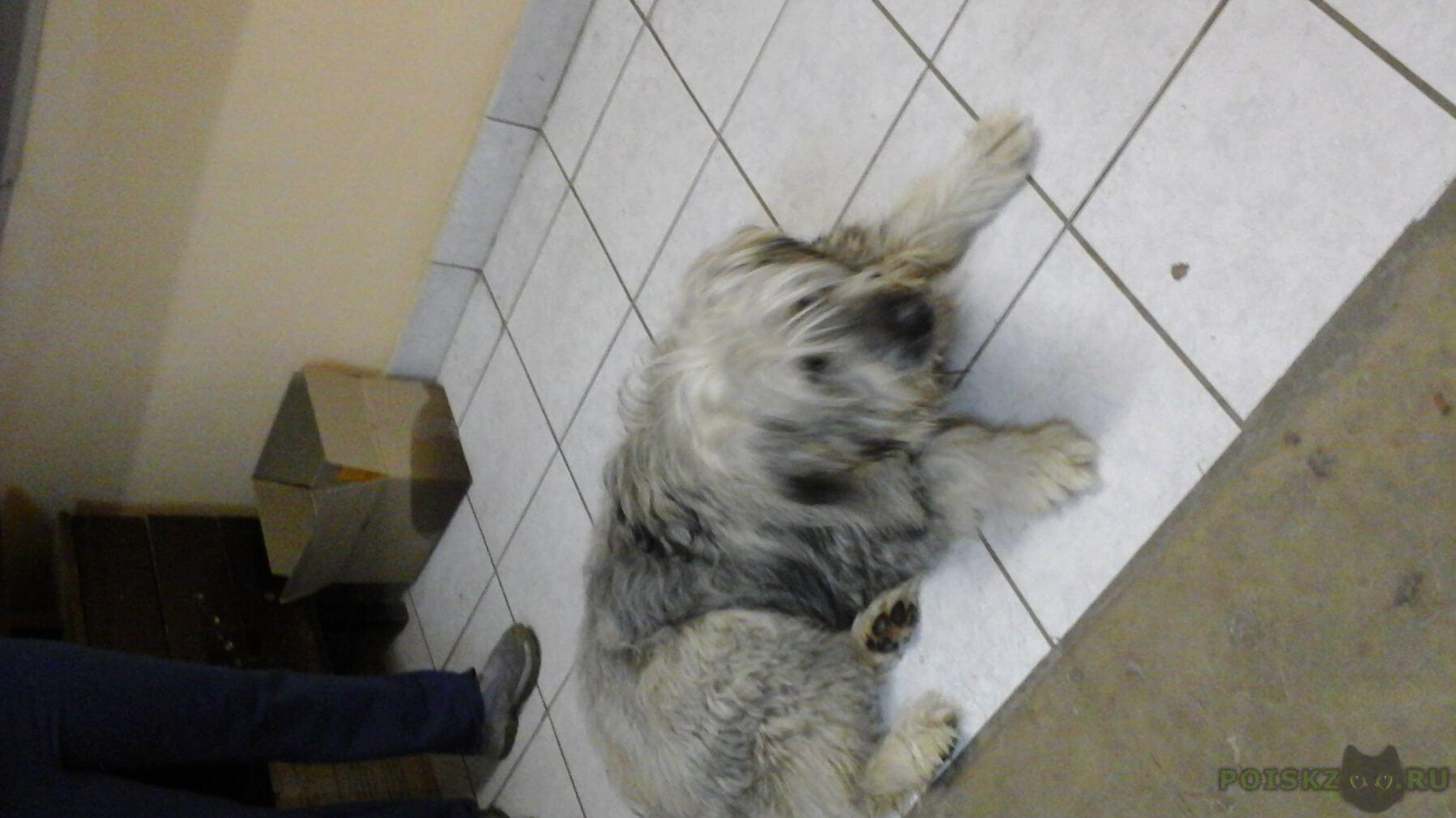 Найдена собака поиск ые собак в мытищах г.Мытищи