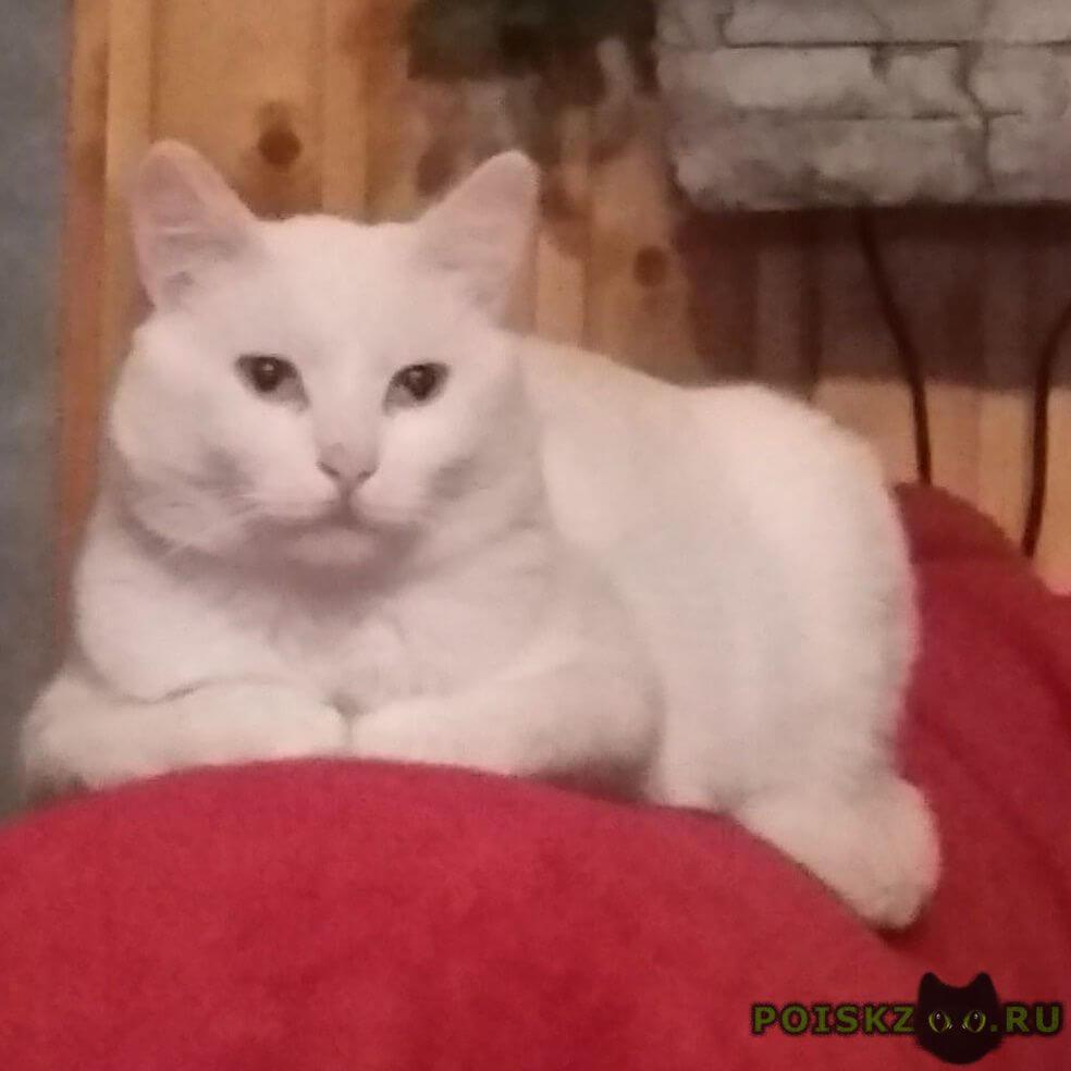 Пропал кот белый. нашедшему вознаграждение. г.Икша