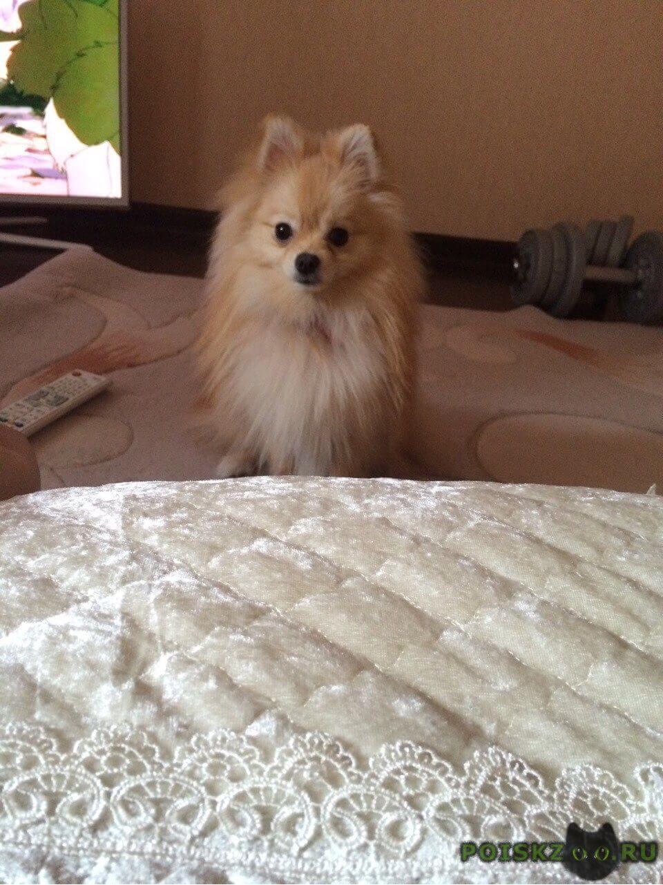 Пропала собака кобель вознаграждение солидное г.Калуга