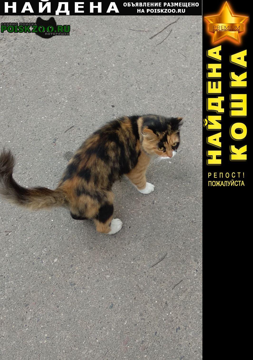 Найдена кошка Королев