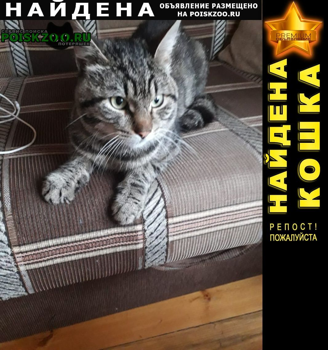 Найден кот в деревне жевнево Истра