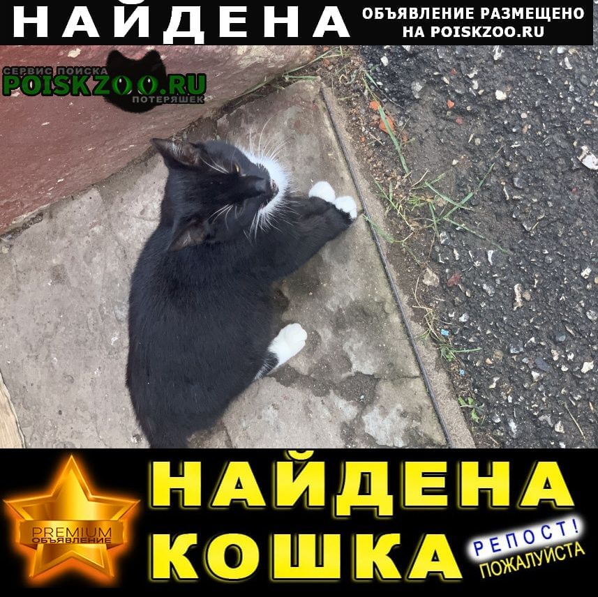Найдена кошка Истра