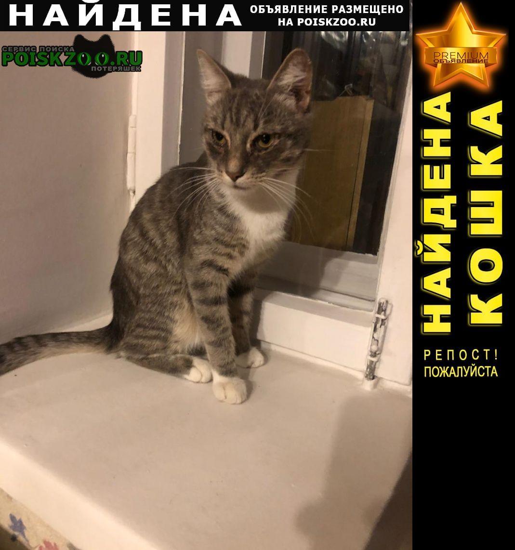 Найдена кошка кот 2-3 мес Обнинск