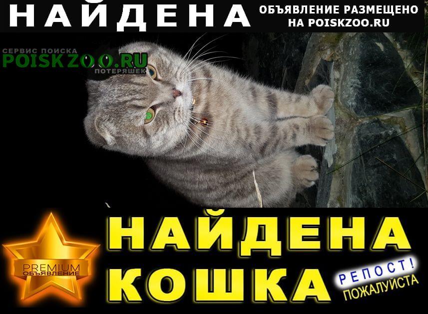 Найдена кошка Раменское