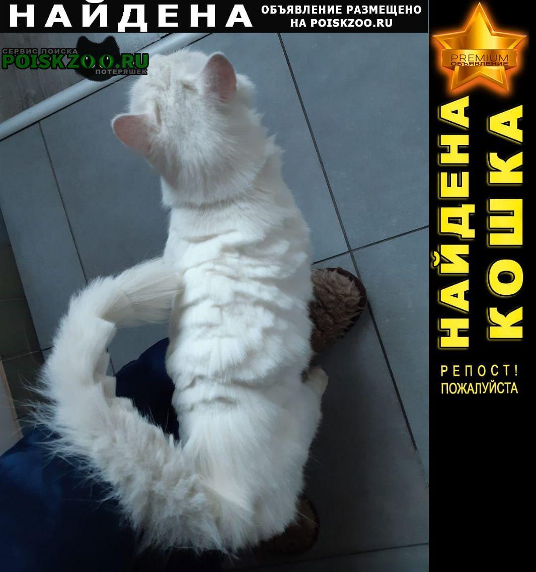 Найдена кошка белая с голубыми глазами Омск