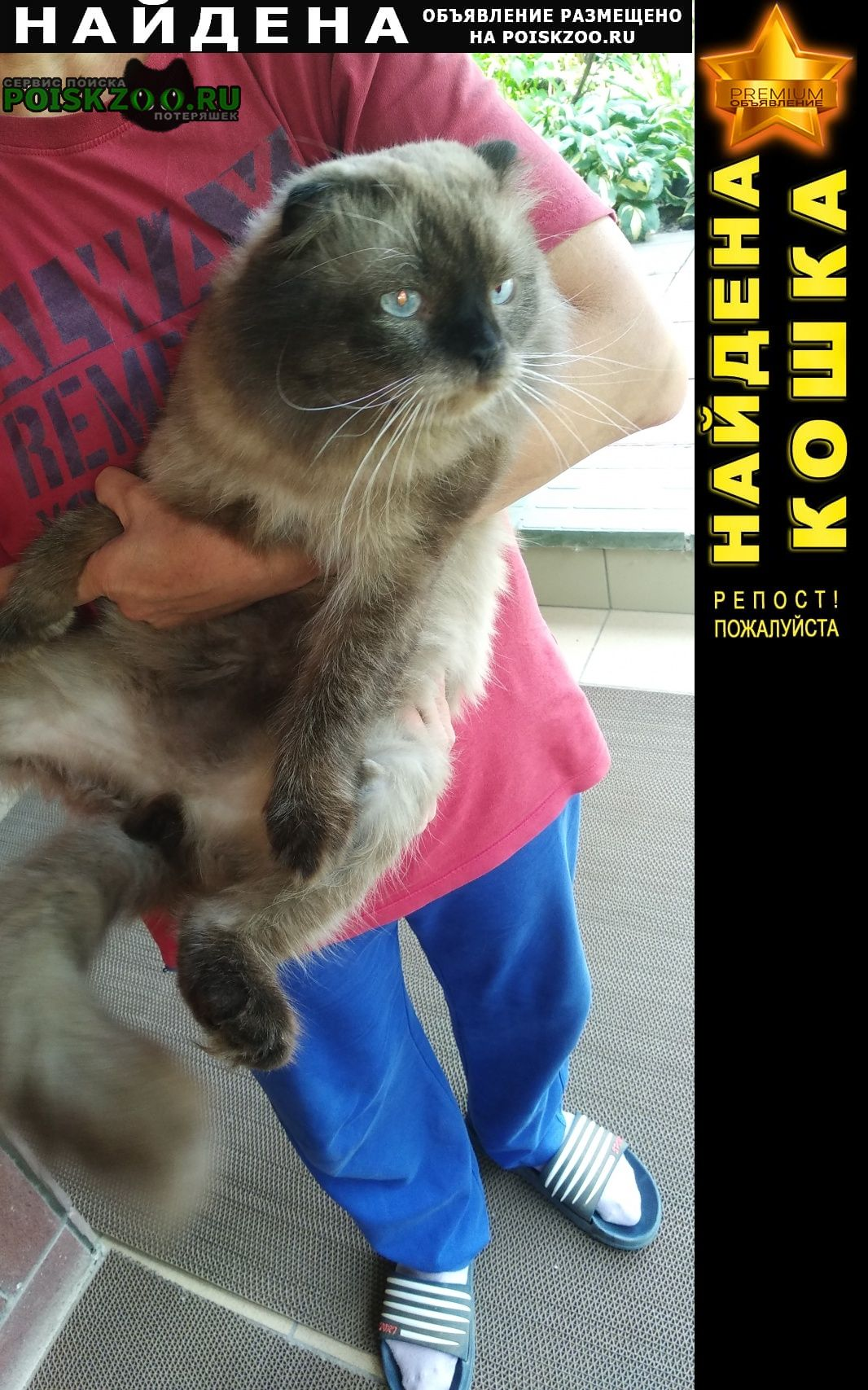 Найдена кошка Волгоград