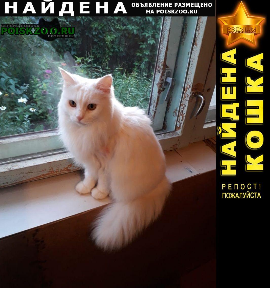 Найдена кошка белая  в лесу Екатеринбург