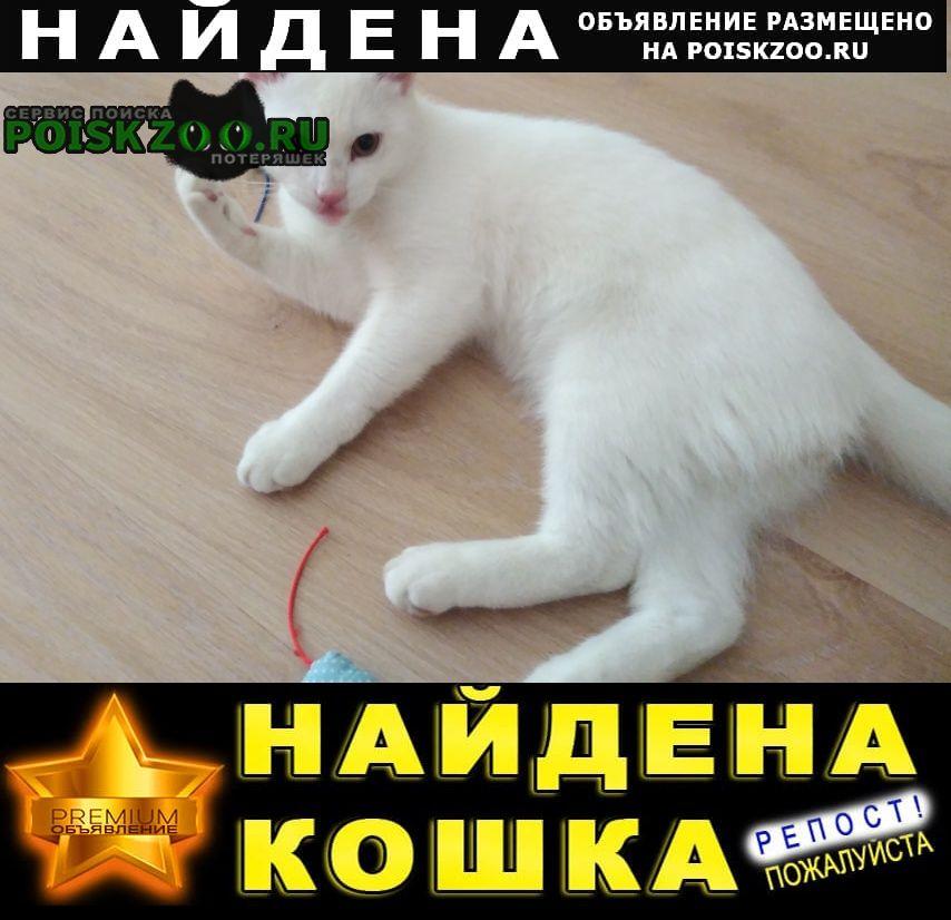Найден кот Брянск