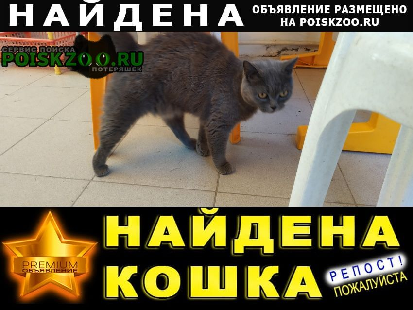Найдена кошка Анапа
