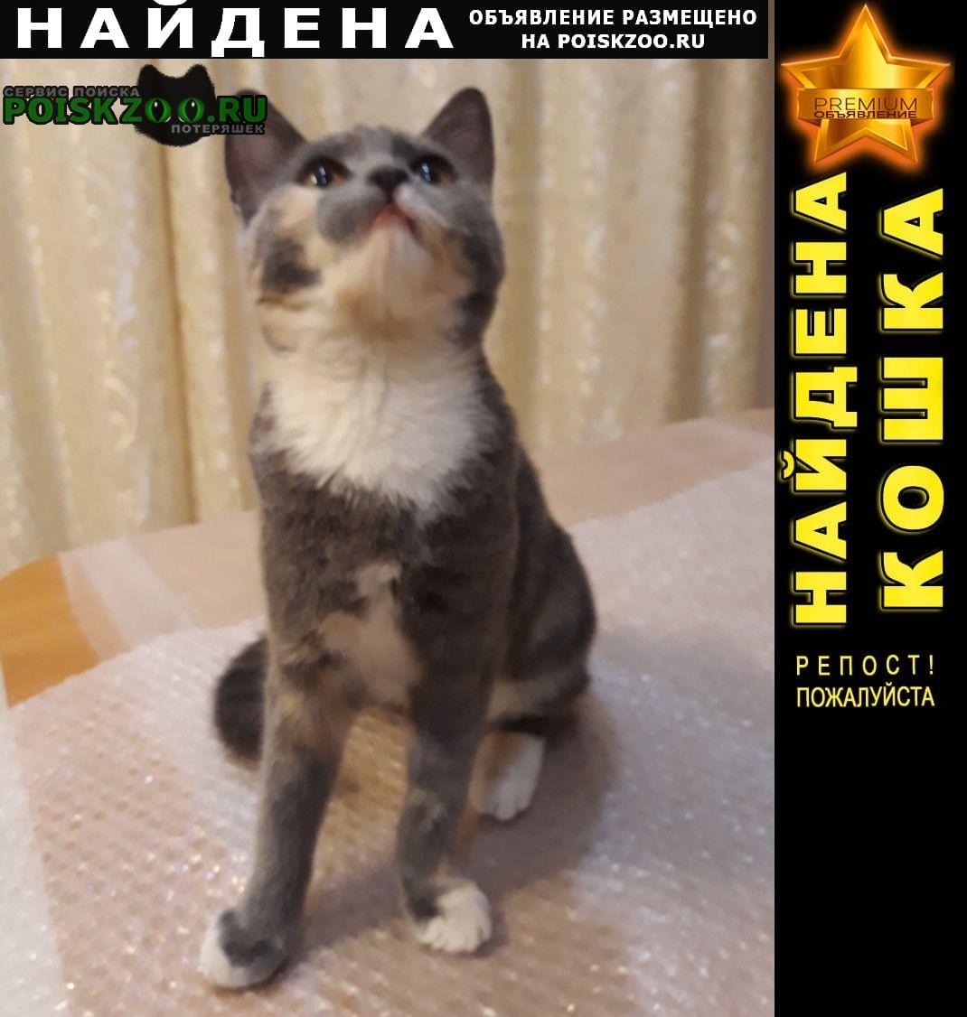 Найдена кошка котенок 5 месяцев Звенигород