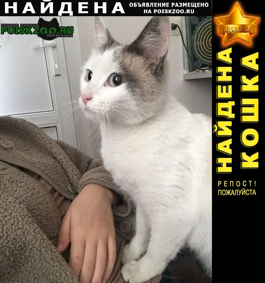 Санкт-Петербург Найдена кошка или кот