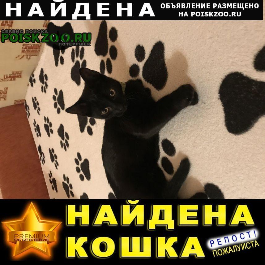 Найдена кошка Новороссийск