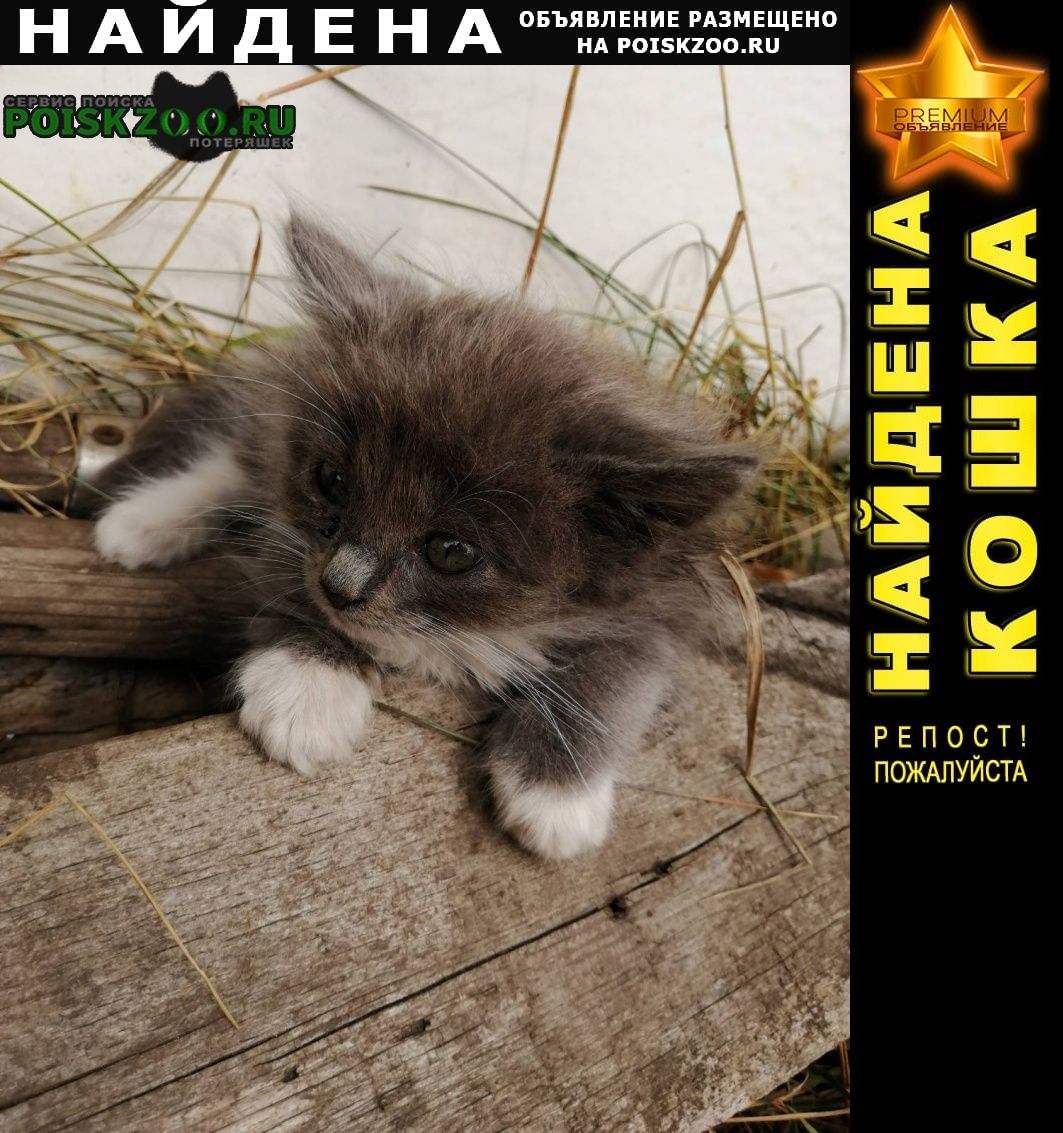 Самара Найдена кошка ищем дом для котят