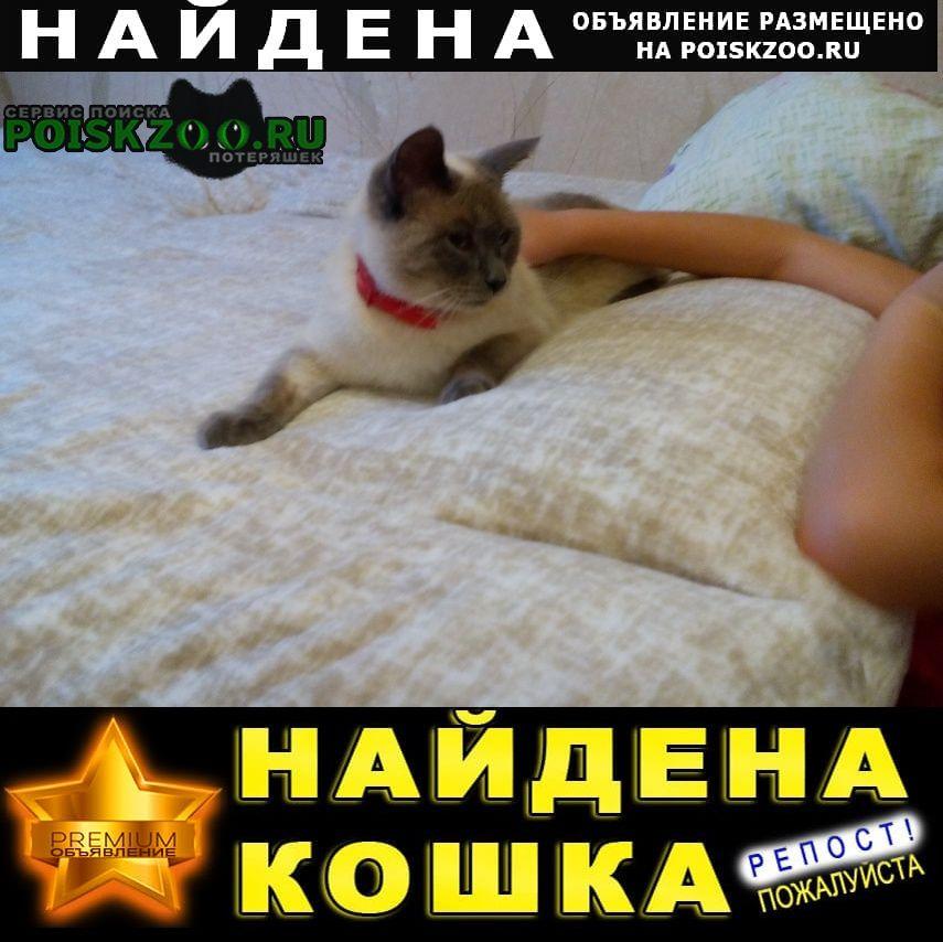 Пермь Найдена кошка