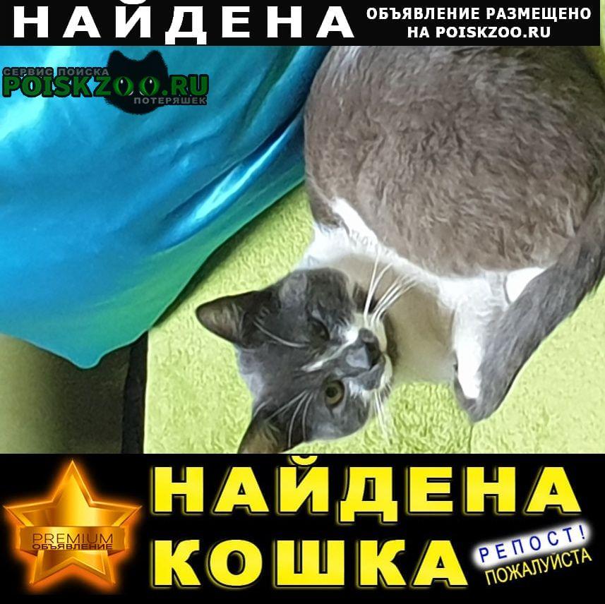 Найдена кошка кот на ул.исаева Королев