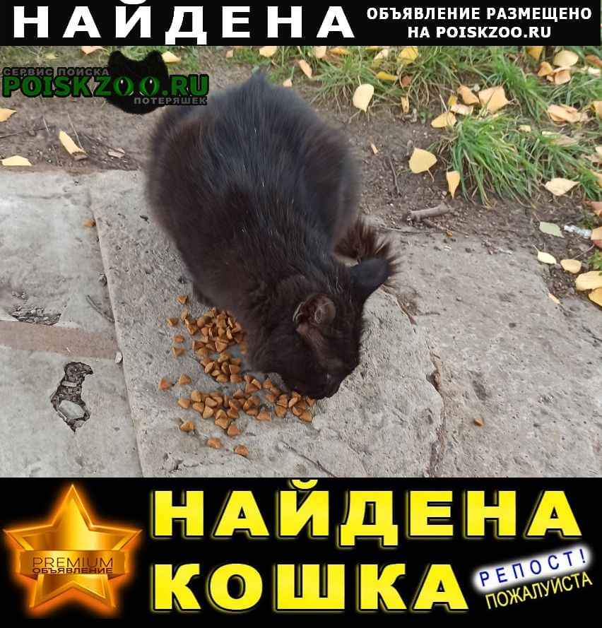 Найдена кошка кот черного цвета Уфа