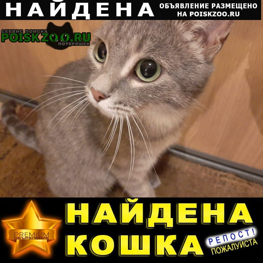 Найдена кошка на ул. дубравная Казань