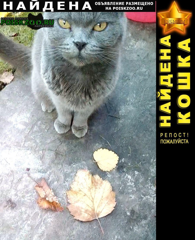 Найдена кошка. ищет дом Брянск