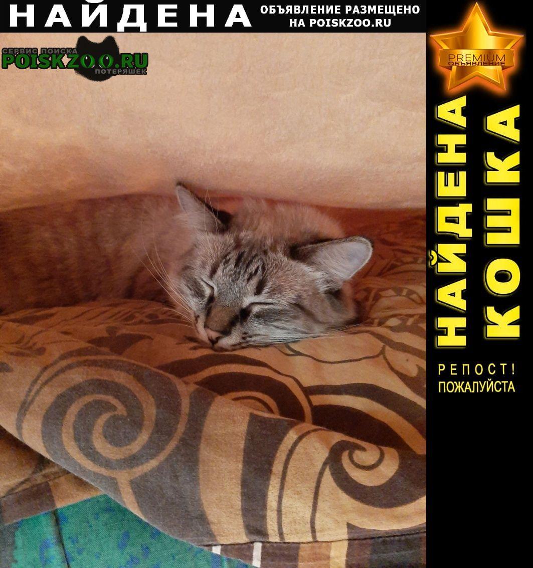 Найдена кошка кот в нежданово Иваново