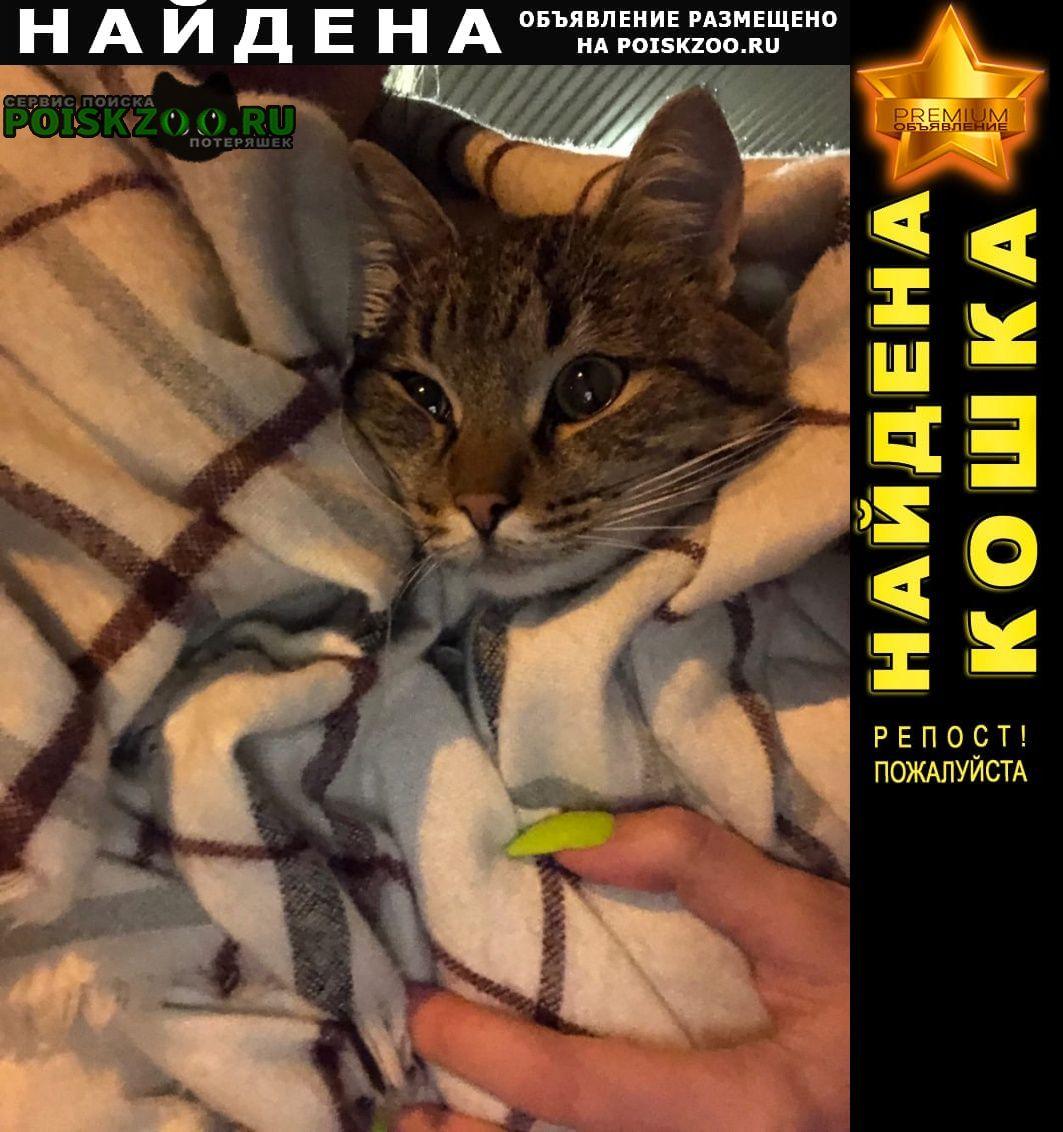 Найден кот многоцветный Москва